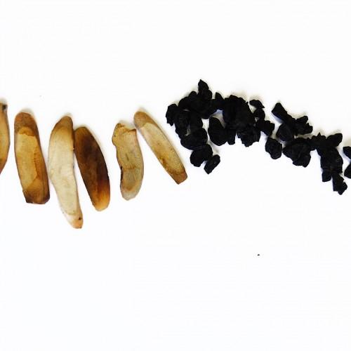 HOU PO (CHAO) - Cortex Magnoliae (Tosta)