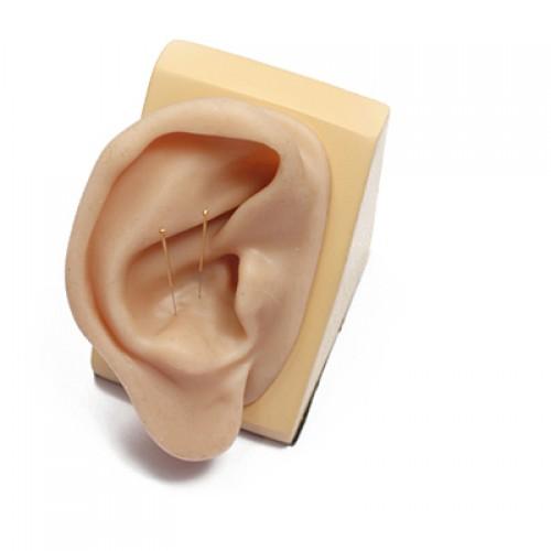 Modèle d'oreille en silicone pour l'acupuncture