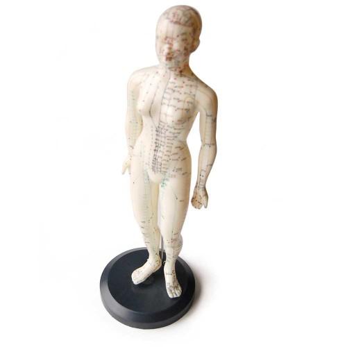 Modèle corps humain femme