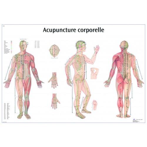 Planches des points d'acupuncture (Français)