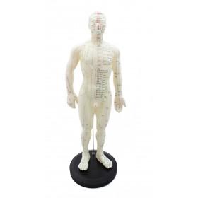 Modèle corps humain homme