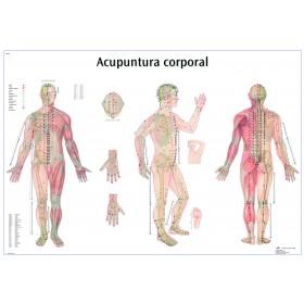 Mural de los puntos de acupuntura (Español)