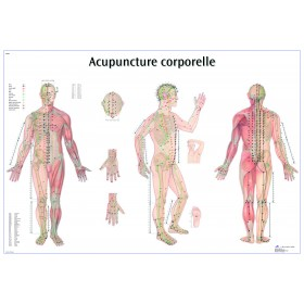 Planches des points d'acupuncture (Français-Chinoi